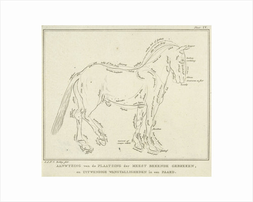 Anatomy of horse with possible defects in physique by Johannes le Francq van Berkhey