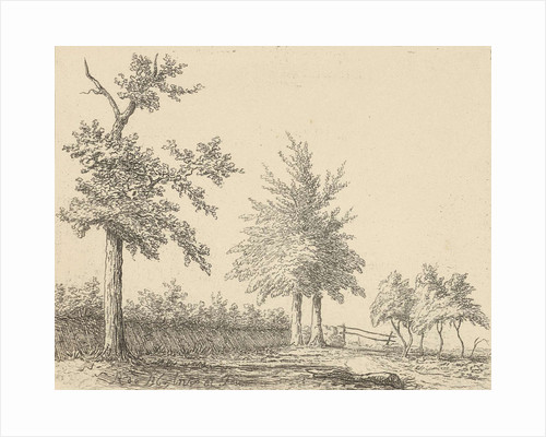 A landscape with a tree left, in the middle two trees and left a clump of trees, in the foreground is a branch on the ground by baron Reinierus Albertus Ludovicus van Isendoorn à Blois