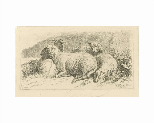 Four sheep lying by Johannes Mock