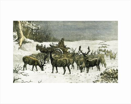 London Richmond Park UK 1887 Feeding the Deer in Severe Weather Great Britain by Anonymous