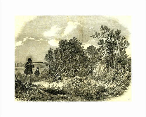 Pheasant Shooting UK 1850 by Anonymous