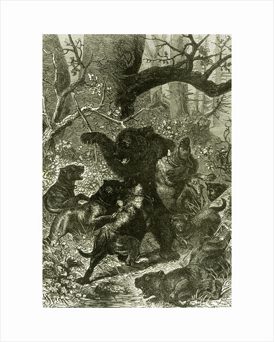 Bear Hunt 1891 Russia by Anonymous