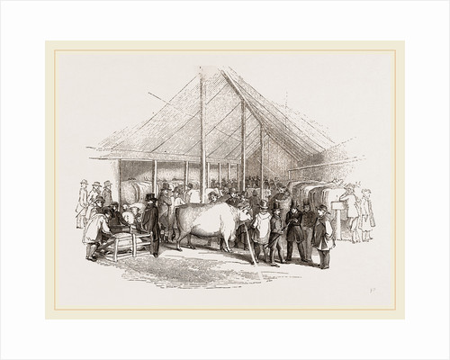 Exhibition of Prize Cattle by Anonymous