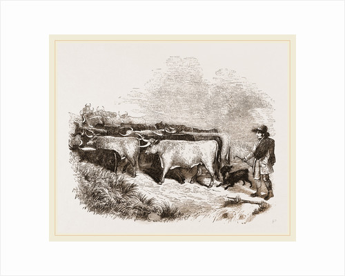 Cattle and Drover by Anonymous