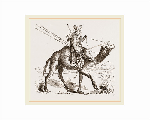 Swift Camel mounted by Anonymous