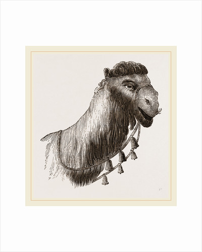 Head of Camel by Anonymous