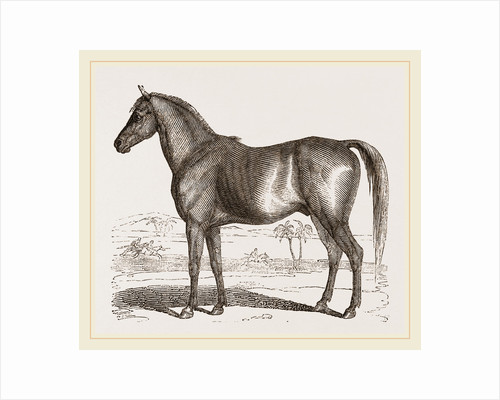 English cart Horse by Anonymous
