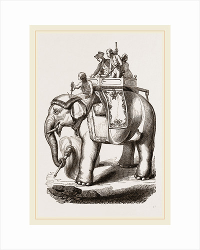 Warren Hastings' Elephant by Anonymous