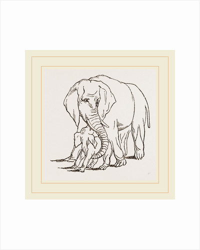 Female Elephant and her young one by Anonymous