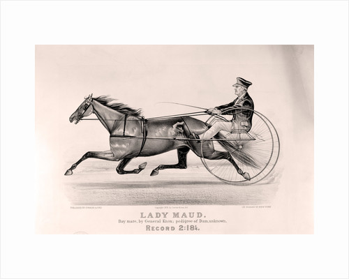 Lady Maud: bay mare, by General Knox by Anonymous