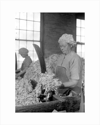 Mt. Holyoke, Massachusetts - Paper. American Writing Paper Co. Rag sorting (Irish), 1936 by Lewis Hine