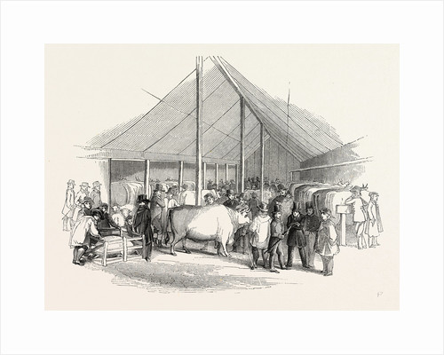 Cattle Show, London by Anonymous