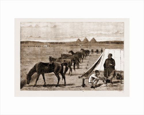 Cavalry Horses At Grass, Cairo by Anonymous