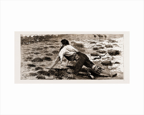 Thrown From His Horse, A Disabled Stockman In The Bush, New South Wales, Australia, 1883 by Anonymous
