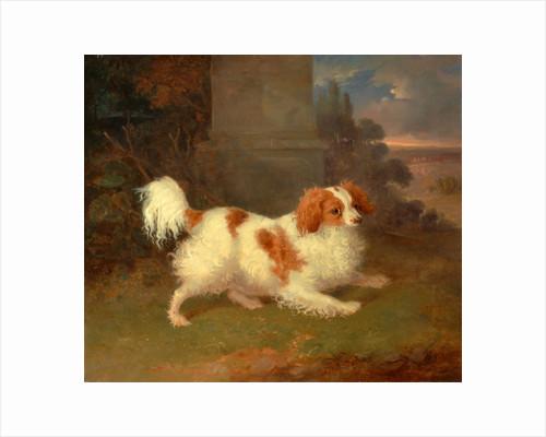 A Blenheim Spaniel, William Webb, ca. 1780-1845 by William Webb