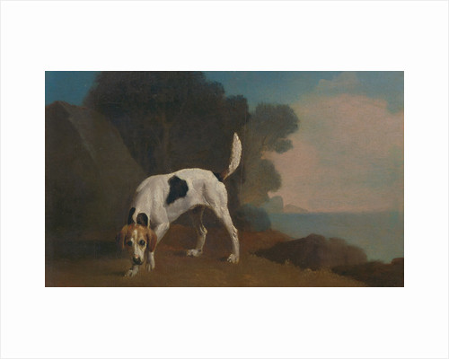 Foxhound Foxhound on the Scent by George Stubbs