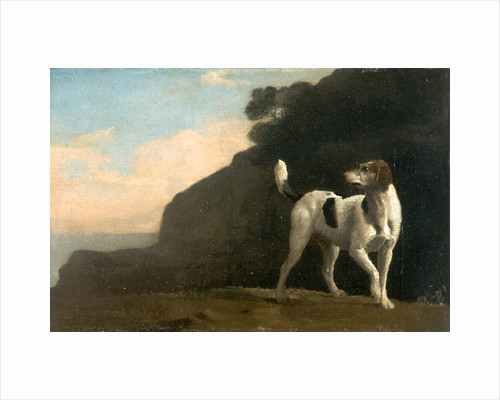 Foxhound A Foxhound by George Stubbs
