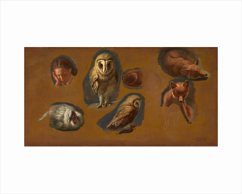Studies of a Fox, a Barn Owl, a Peahen, and the Head of a Young Man Studies of a Fox, a Barn Owl, a Peahen and a Young Man's Head by Jacques-Laurent Agasse