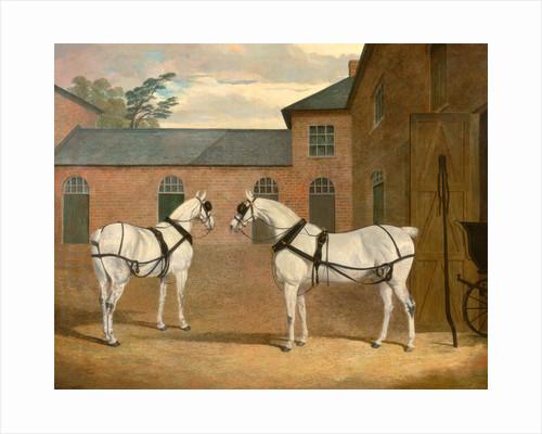 Grey carriage horses in the coachyard at Putteridge Bury by John Frederick Herring