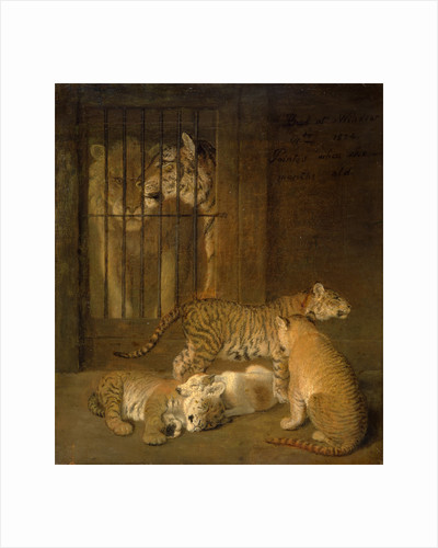 Group of Whelps Bred between a Lion and a Tigress by Jacques-Laurent Agasse