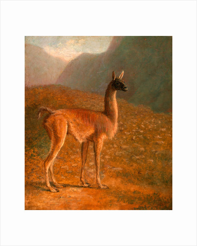 Guanaco 'A Male Vicuna' by Jacques-Laurent Agasse