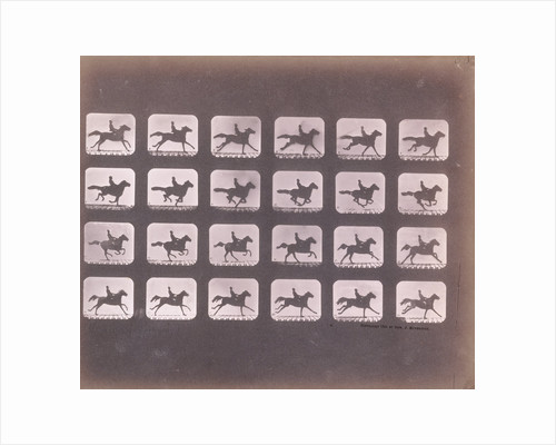 Running (Galloping) by Eadweard J. Muybridge