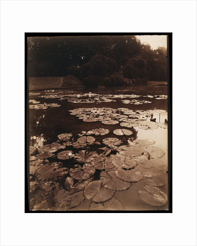 Water Lilies by Eugène Atget