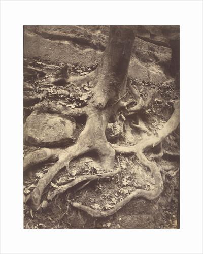 Saint-Cloud, Tree Roots, Saint Cloud Park by Eugène Atget