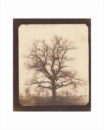An Oak Tree in Winter by William Henry Fox Talbot