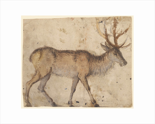 Study of a Stag (recto), Study of Goats (verso) by Lucas Cranach the Elder