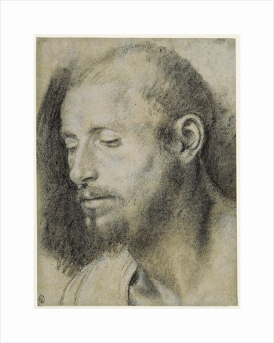 Study of the Head of a Bearded Man by Giovanni Girolamo Savoldo