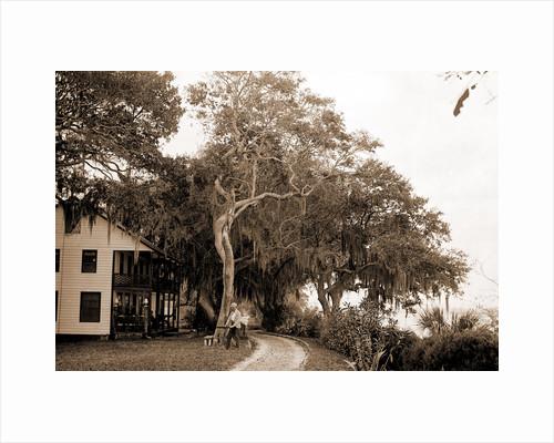 Bostrom's, near Ormond, Jackson, Bostrom's (Ormond Beach, Fla.), Buildings, United States, Florida, Ormond Beach, 1880 by William Henry