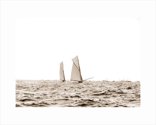 Columbia and Shamrock I, a luffing match, Columbia (Sloop), Shamrock I (Yacht) by Anonymous