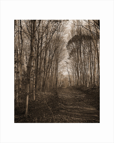 A Roadway in autumn, Berkshire Hills by Anonymous