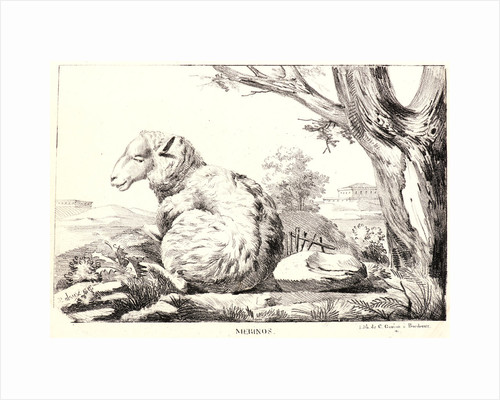 Merinos, 1818 by Jean-Paul Alaux