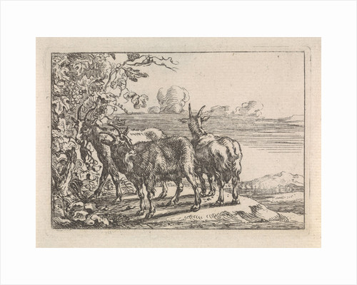 Goats at a vine by G. Quineau