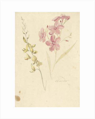 Oleander and broom by Elias van Nijmegen