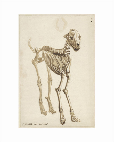 The skeleton of a dog by Christiaan Kramm