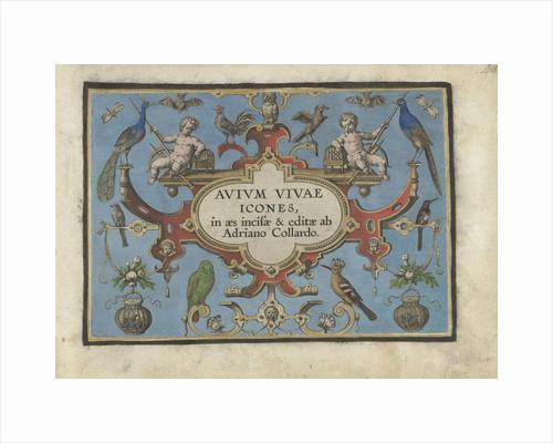 Title print for, Avium vivae Icones... by Adriaen Collaert