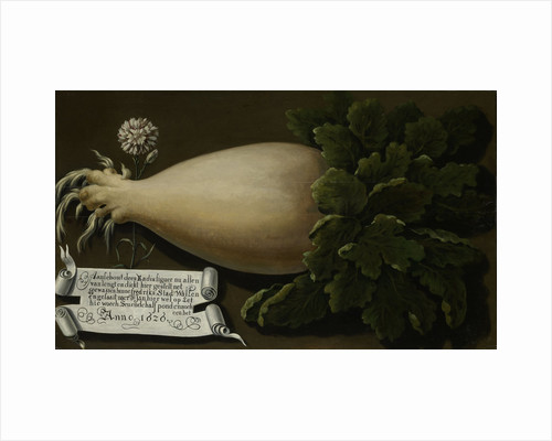 A Giant Radish by Anonymous