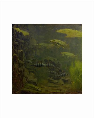 Pike and bass in an aquarium by Gerrit Willem Dijsselhof