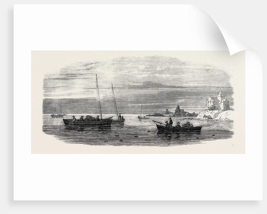 The Shellfish Supplies: Crab Fishing Off Fife Coast 1862 by Anonymous