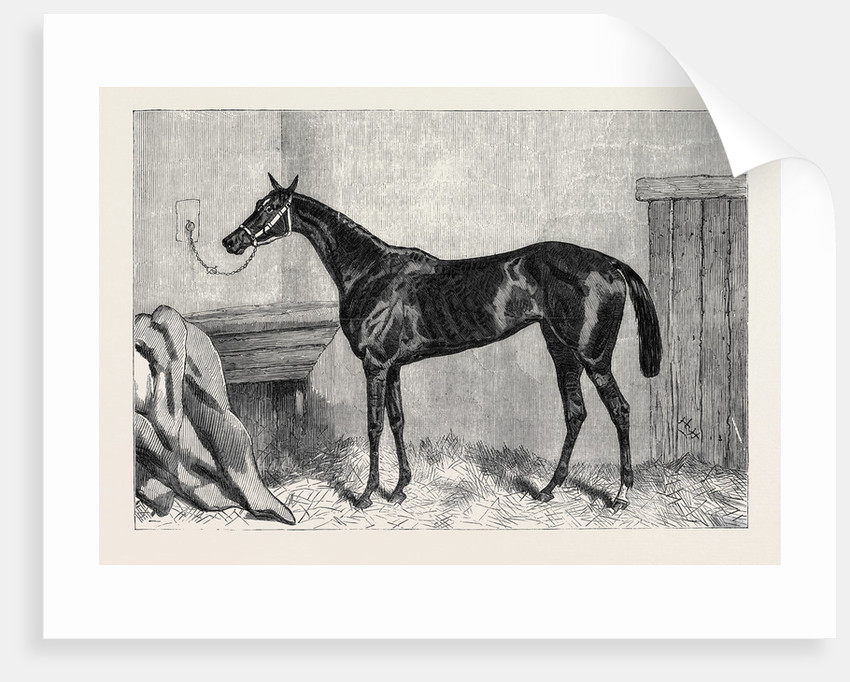 Tormentor the Winner of the Oaks 1866 by Anonymous