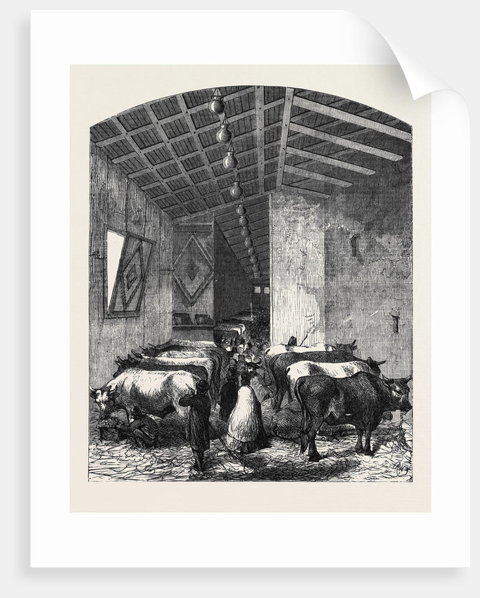 The Cattle Department at the Italian Exposition Florence by Anonymous