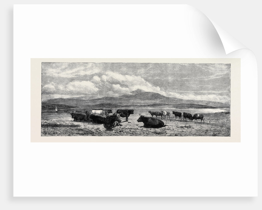 Cattle on the Sands Near Port Madoc North Wales, in Mr. Flatou's Collection by Anonymous