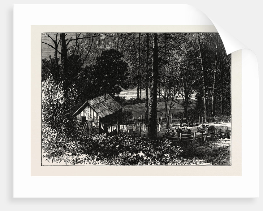 A Miner's Cabin by the American River, California by Anonymous