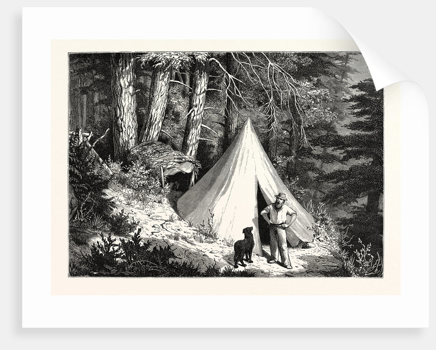 A Summer Encampment in a North Pacific Forest: Copper Mountain, Near Alberni, on the Western Shores of Vancouver Island by Anonymous
