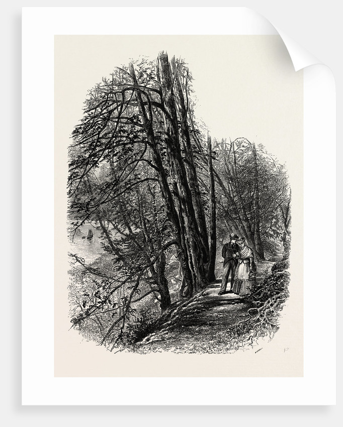 In Cliefden Woods, Scenery of the Thames by Anonymous