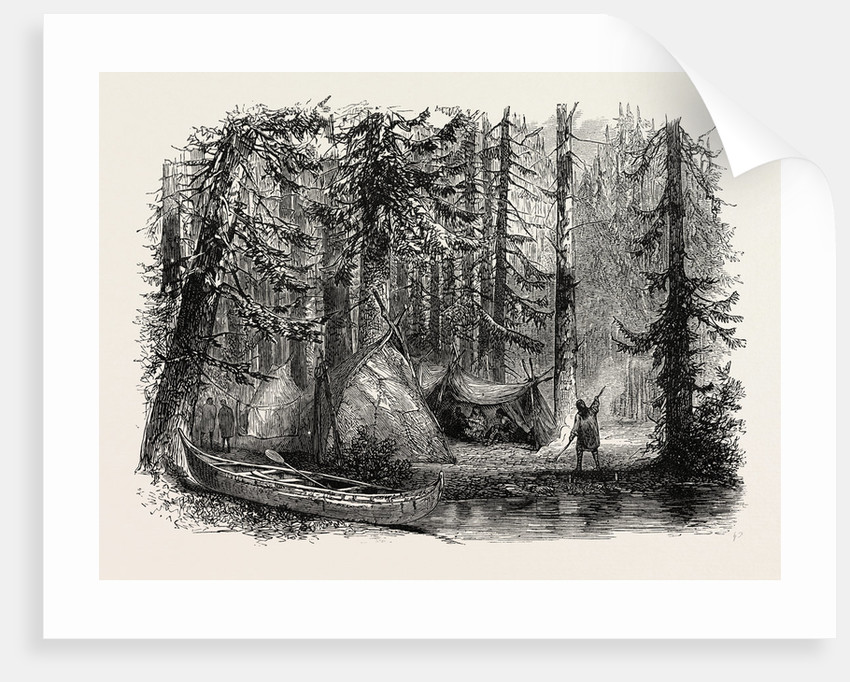 Primeval Forest and Indian Lodges by Anonymous