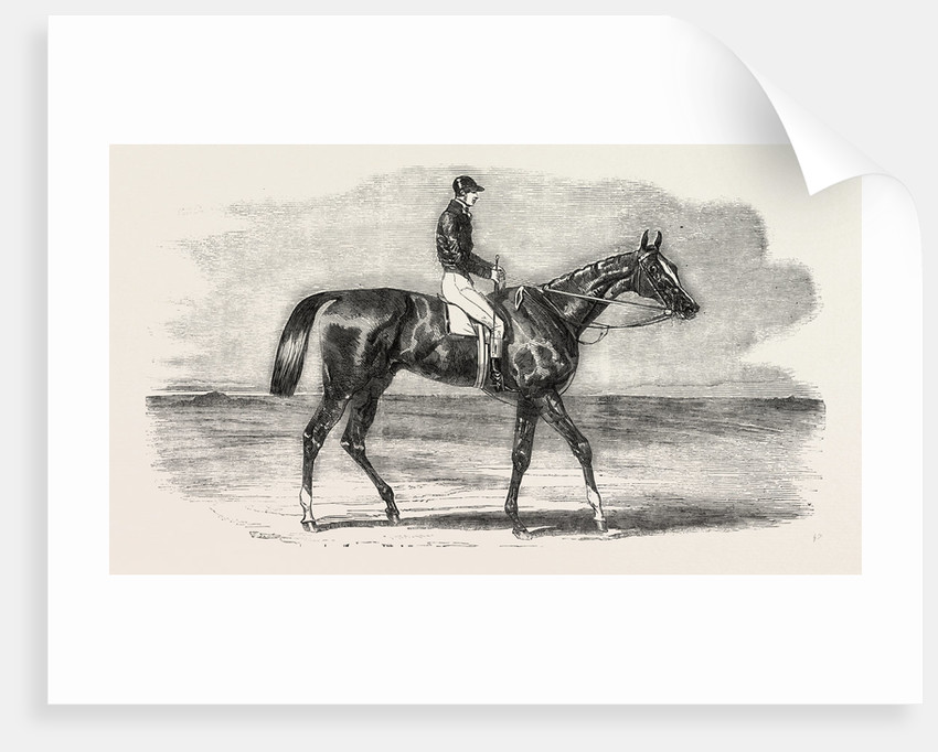 Epsom Races: Teddington, the Winner of the Derby, UK, Horse Racing, Equestrian by Anonymous